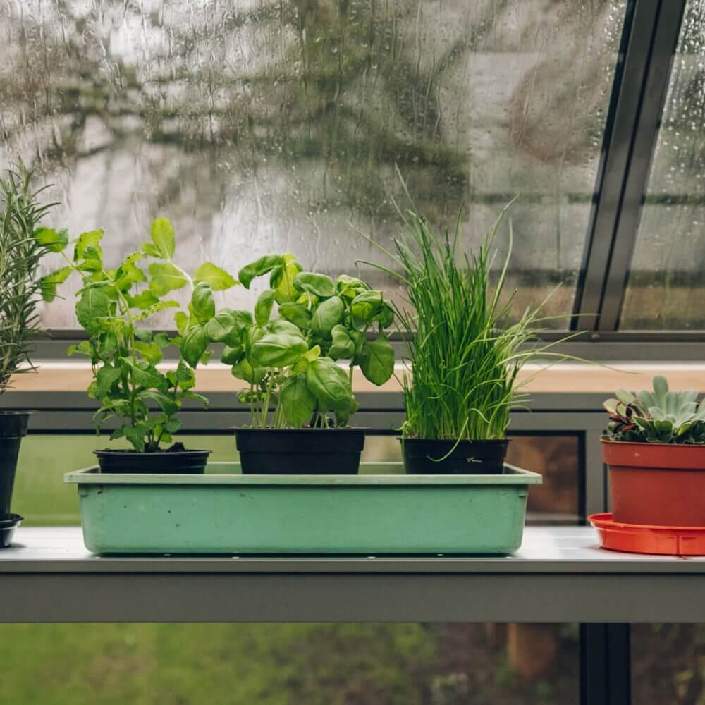 shelving, greenhouse shelf