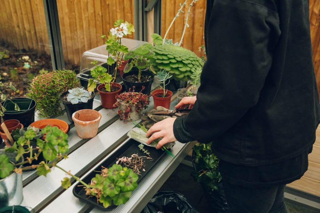buy greenhouse